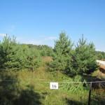 Август 2013г. Участок № 16 со стороны внутрипоселковой дороги