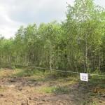 Август 2013г. Участок № 22 в Поселке Никоновское