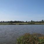 Август 2013г. Вид на Поселок со стороны озера